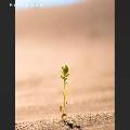 Miss Priyanka